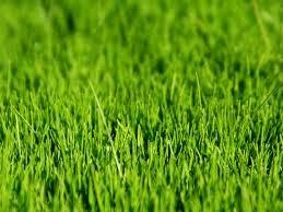 espace vert
